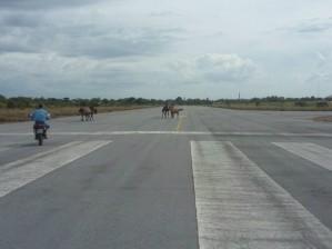 cavalos pista aeroporto porto murtinho